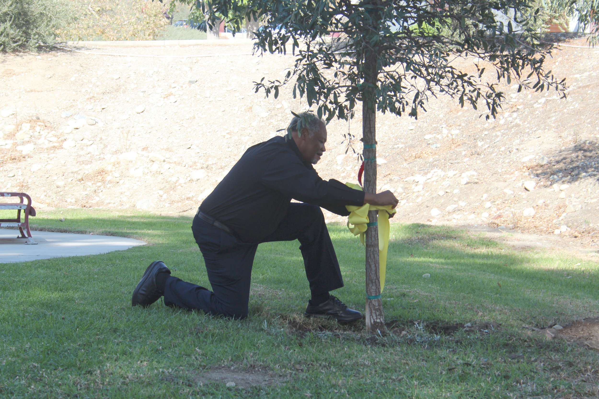 Dr. Henry Shannon tying a ribbon around the canyon oak tree dedicated to the veterans of Chaffey College. Photo by Brody Salazar.