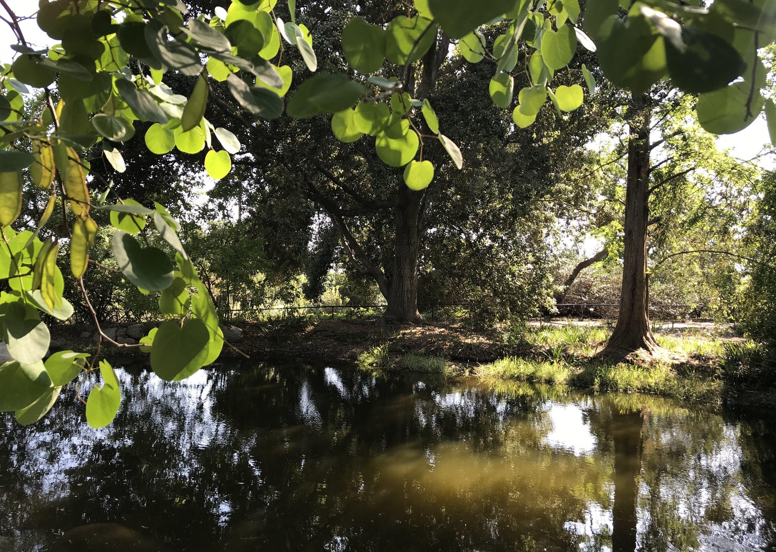 A pond inside the botanic garden.