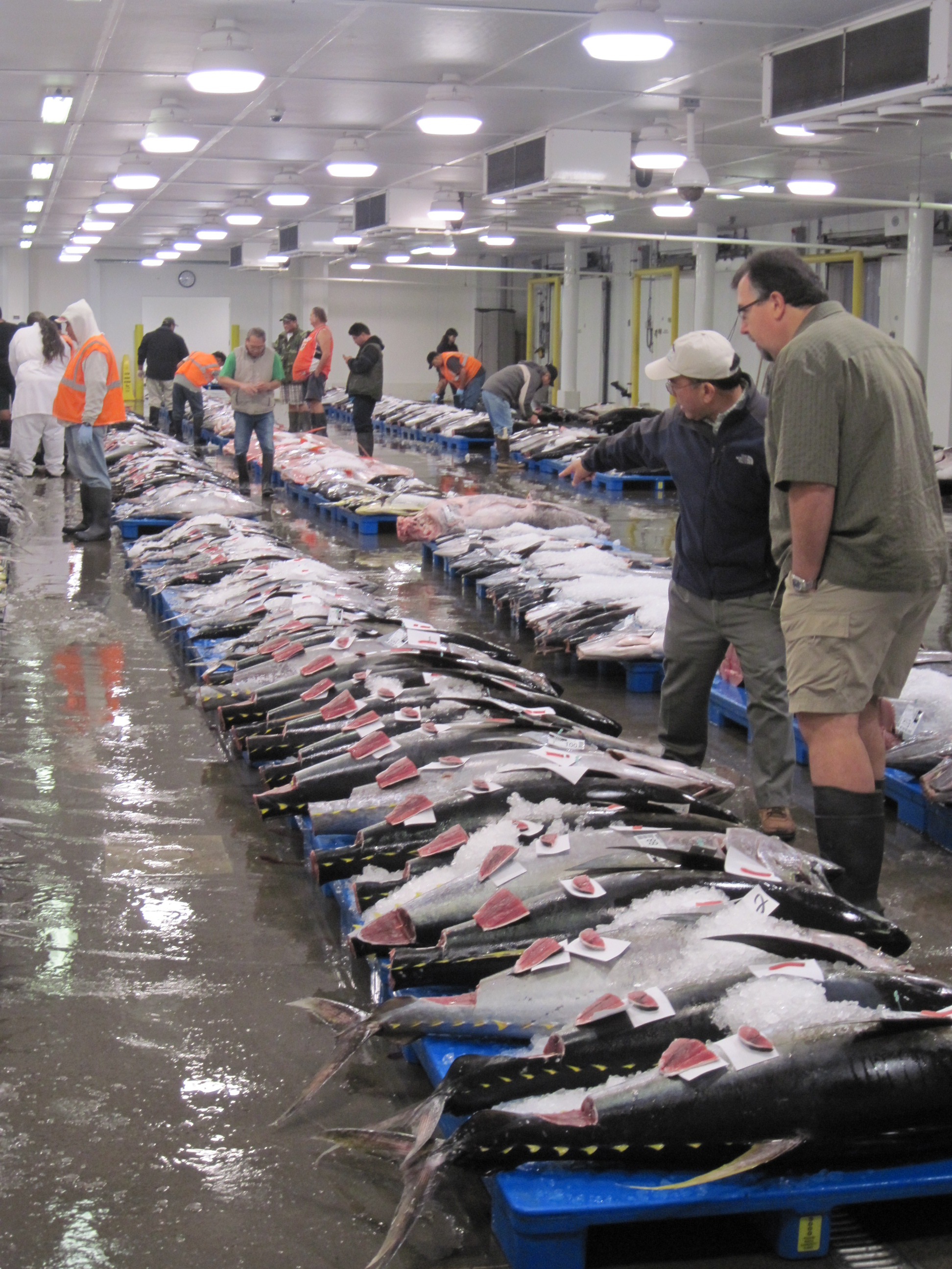 NOAA_Education Assistant_Fish Auction_20101007_pic  (12).JPG