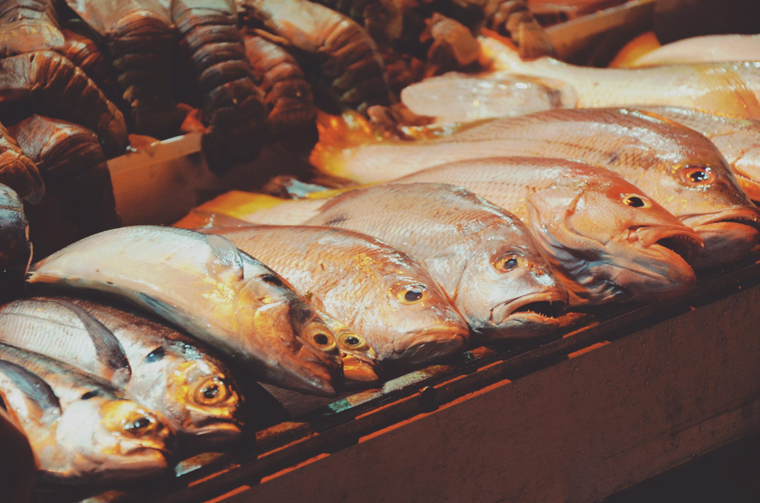 Wild Caught Fish    Healing Nutrient:  Selenium  Liver Detoxifier   Simple Herb Crusted Salmon Recipe