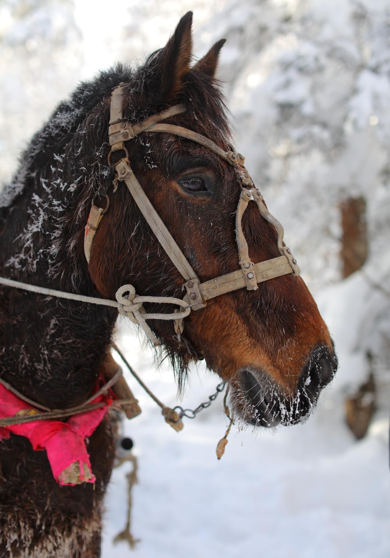Jilin-Winter4-NikiCsanyi