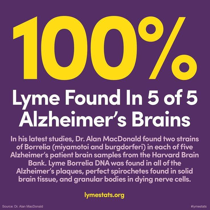lyme-disease-alzheimers.jpg