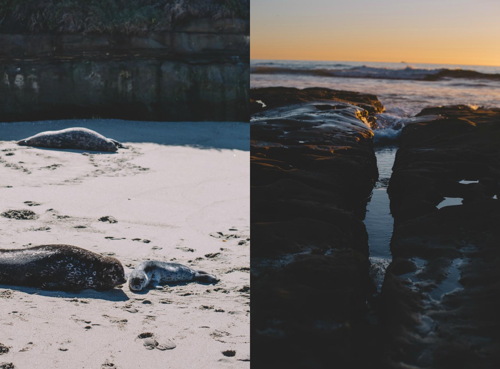 La Jolla Seals.jpg