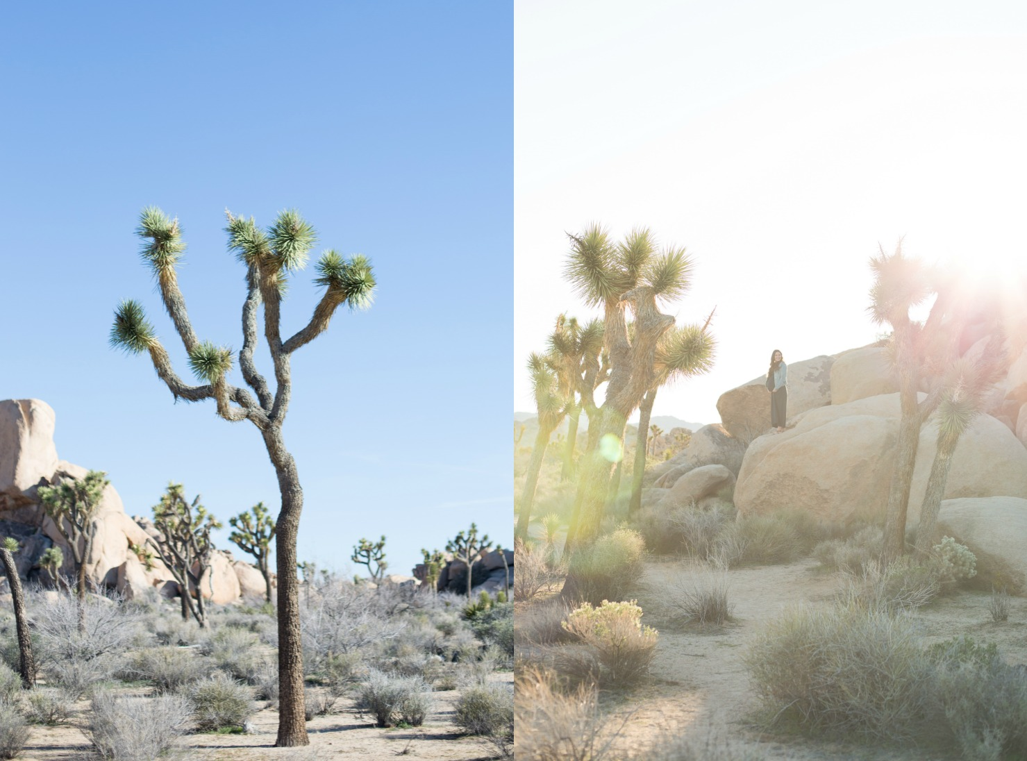 Joshua Tree Maternity photo Session.jpg