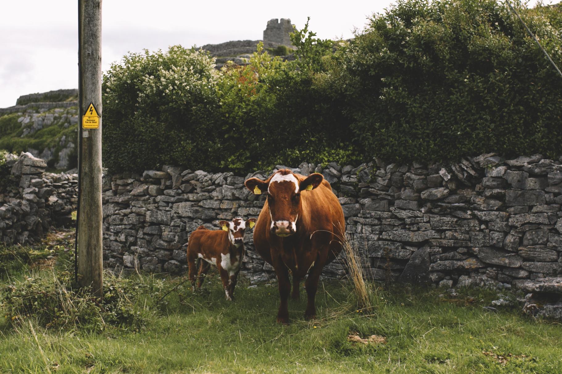 10 Tear Anniversary Trip - Aran Island Inis Mor Inis Orr Ireland  (43 of 73).jpg