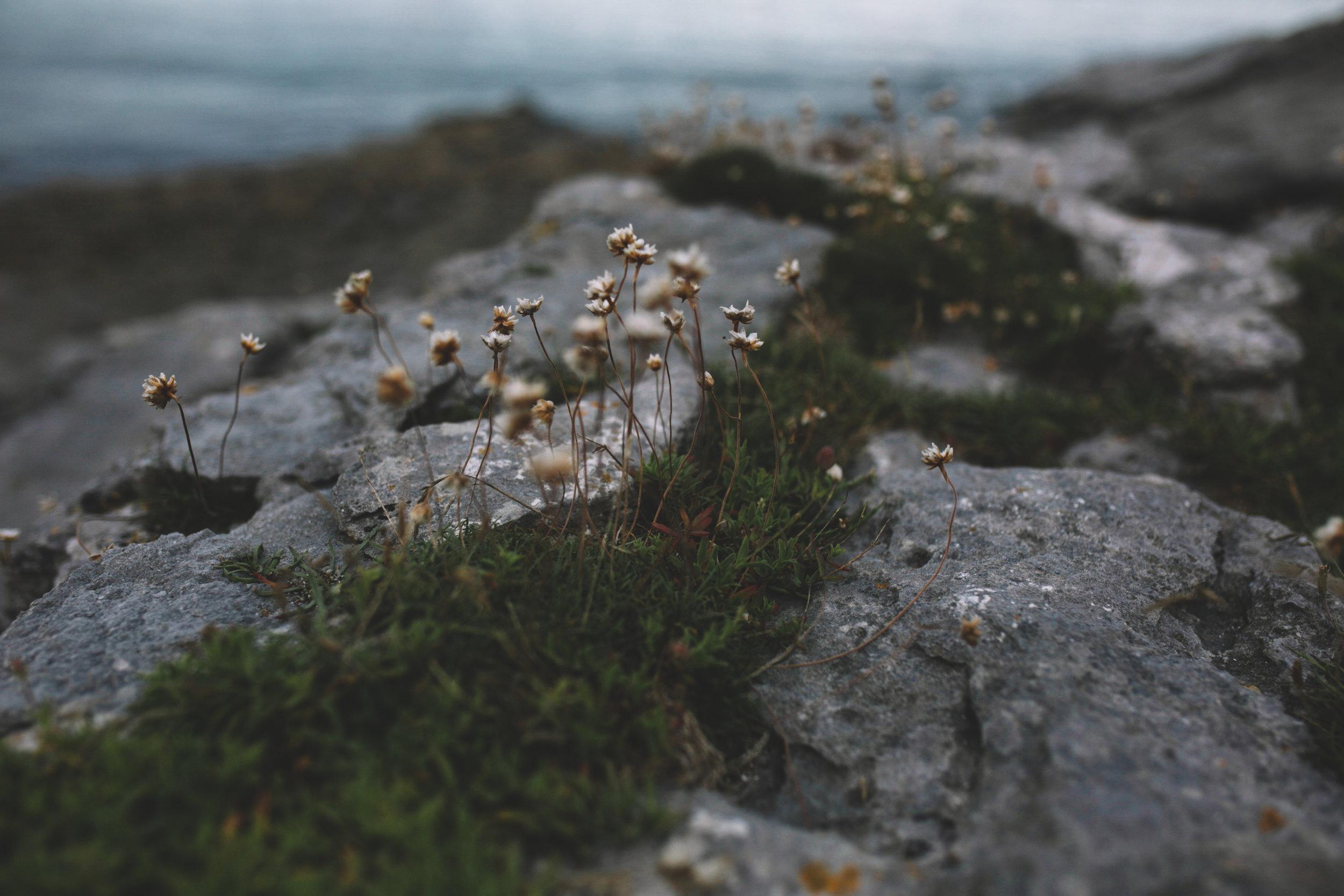 10 Tear Anniversary Trip - Aran Island Inis Orr Cliffs of Moher  (5 of 96).jpg