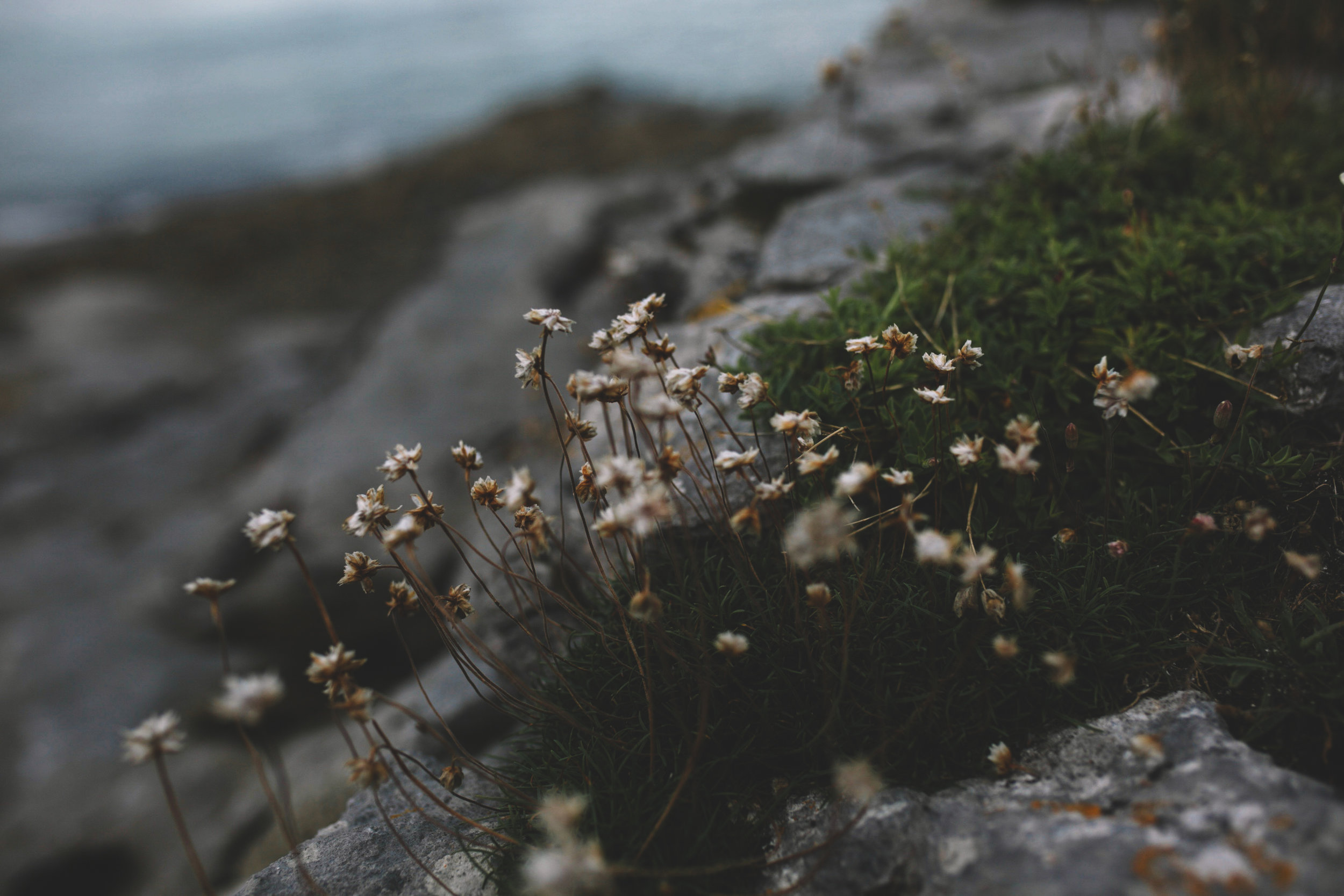 10 Tear Anniversary Trip - Aran Island Inis Orr Cliffs of Moher  (6 of 96).jpg