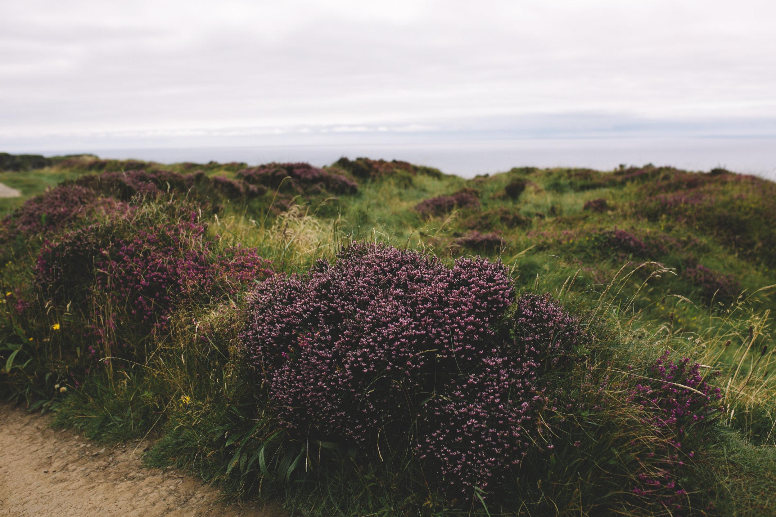10 Tear Anniversary Trip - Aran Island Inis Orr Cliffs of Moher  (92 of 96).jpg