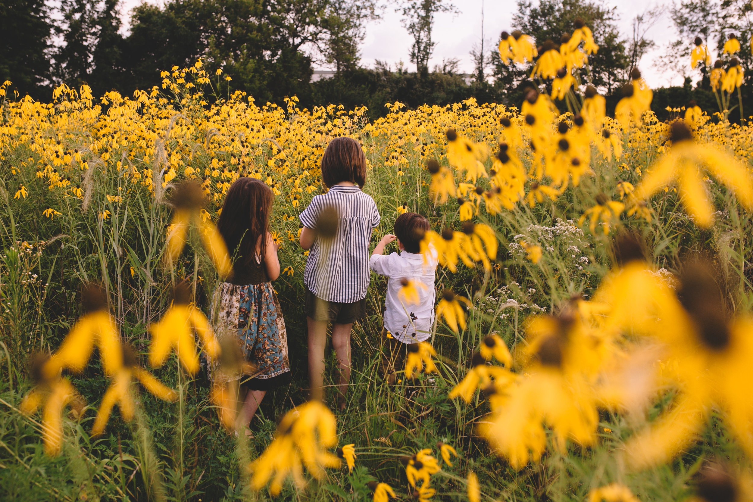 Golden Flower Field Mini Session Indianapolis IN (34 of 58).jpg