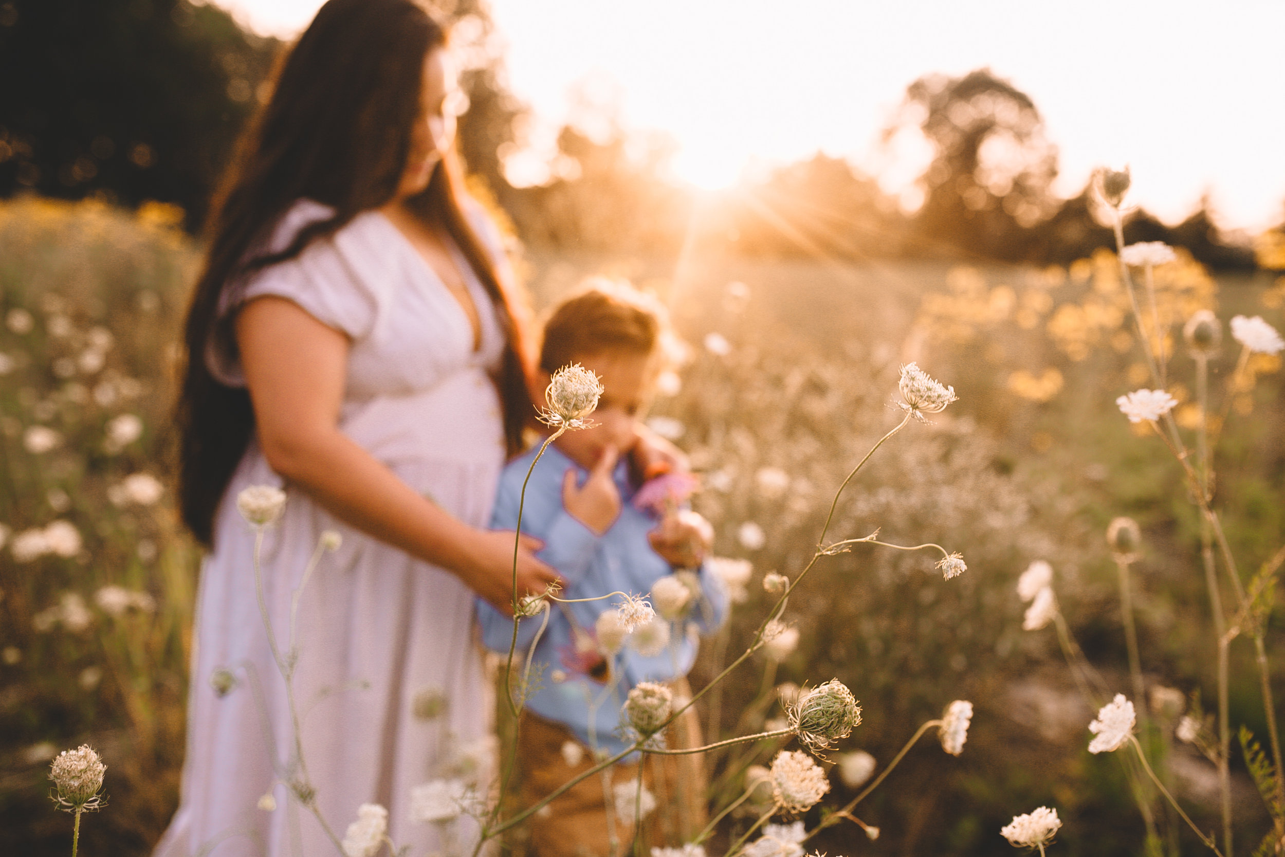 Golden Flower Field Mini Sessions {Indianapolis, IN}