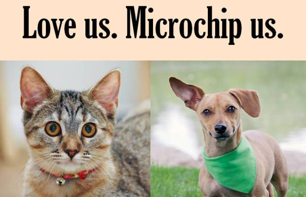Did you know that more pets are lost on July 4th than any other day? We are offering a 20% discount on Microchips from June 1, 2019 - July 3, 2019. Make sure your pets always come home to you and protect them with a microchip. Call today to set up a drop in appointment. 510-357-8574.