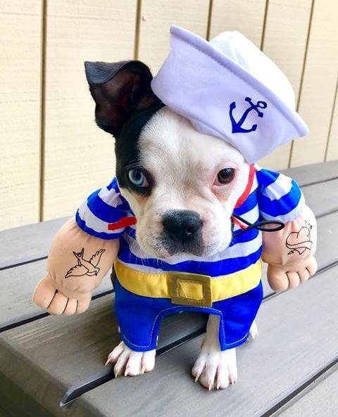 Azul - Popeye.jpg