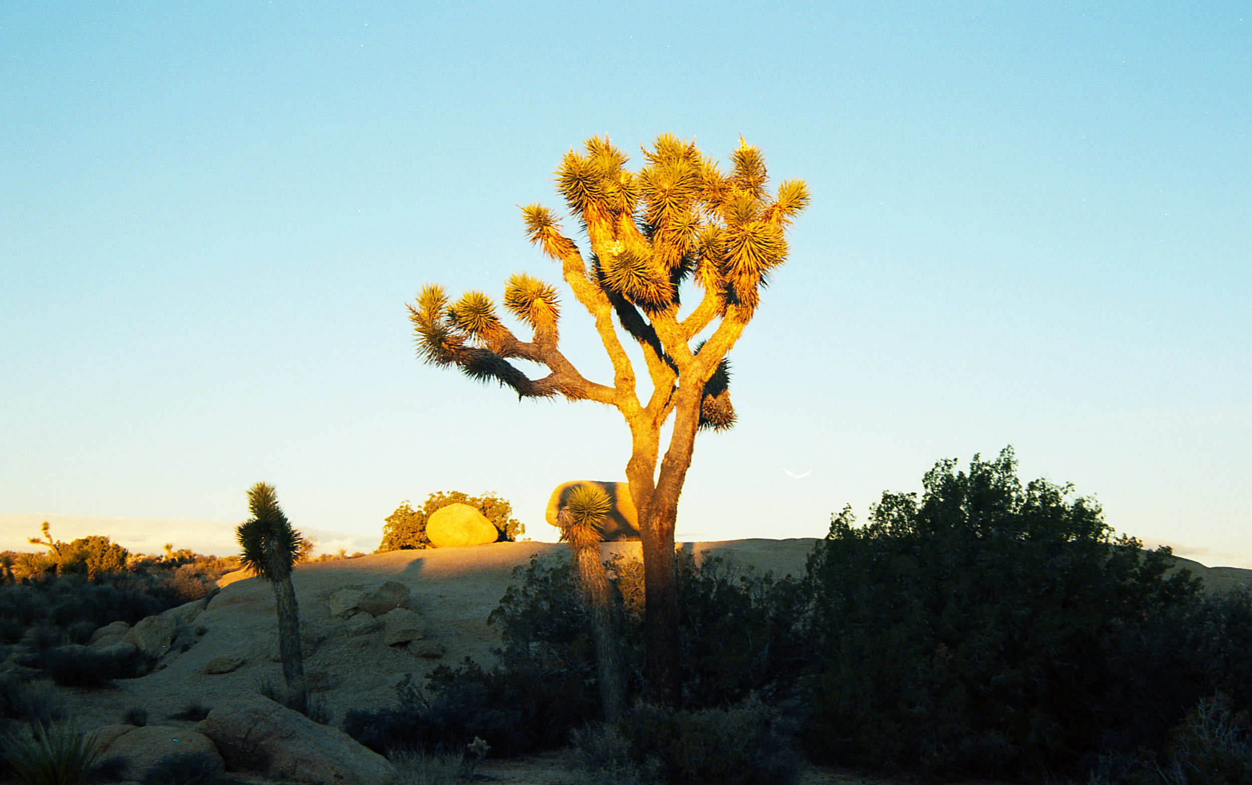 The joshua trees remind me of something right out of a Dr. Seuss book. What do you think?