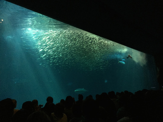 Sardines are incredible