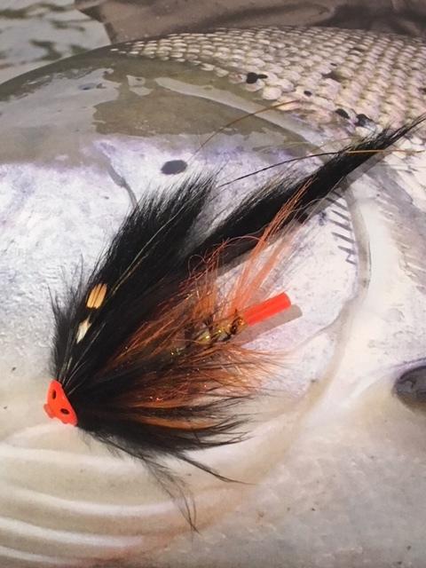Black & Orange Opossum