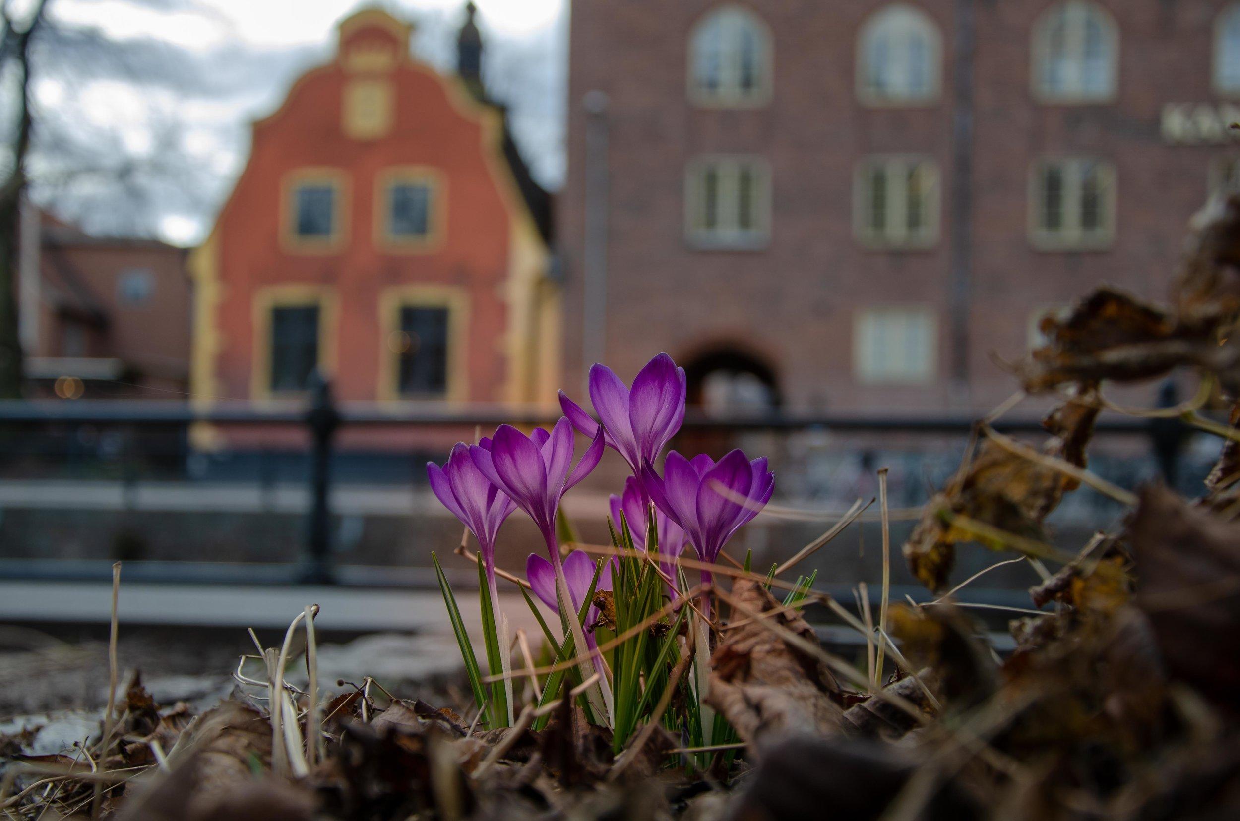 Photo by  Johannes Plenio  on  Unsplash