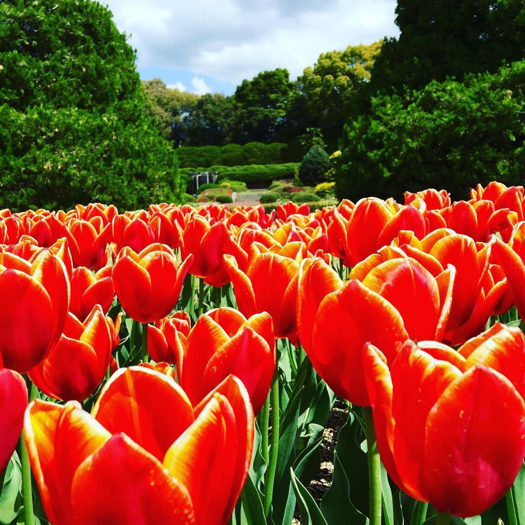 at Kyoto Botanical Garden