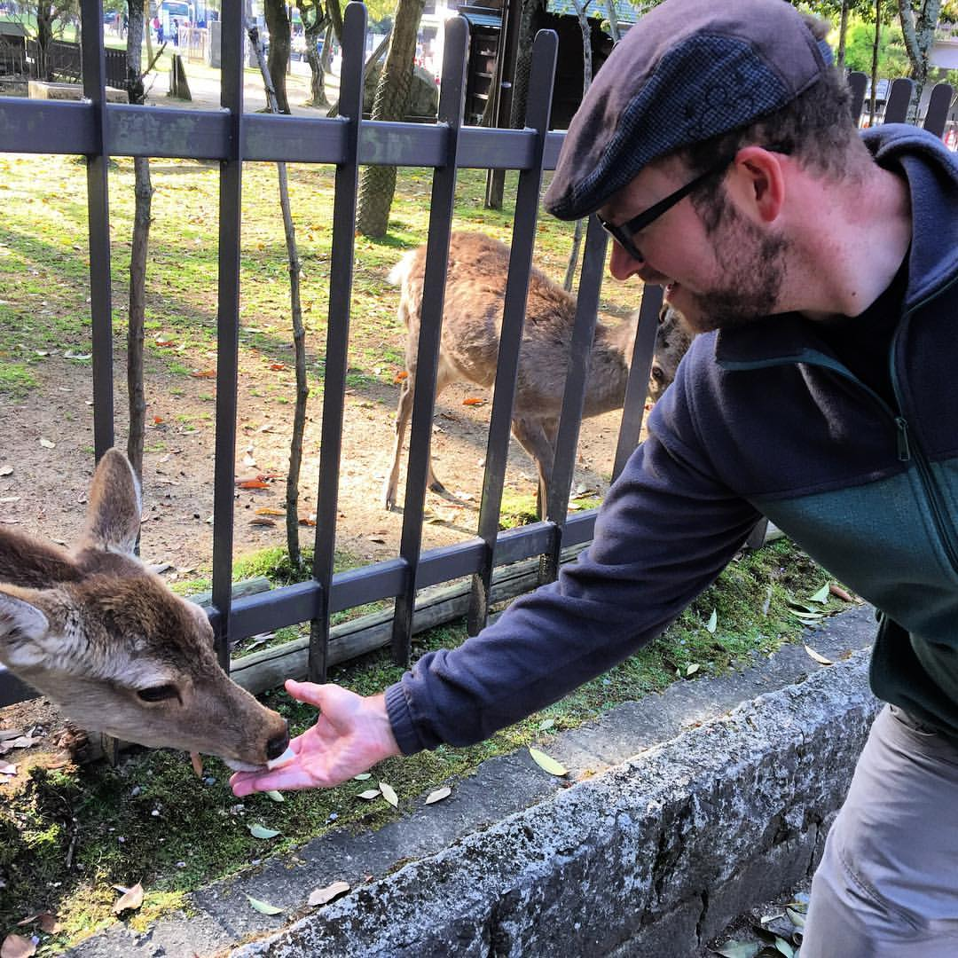 Feeding deer at Nara park. (at Nara Park)