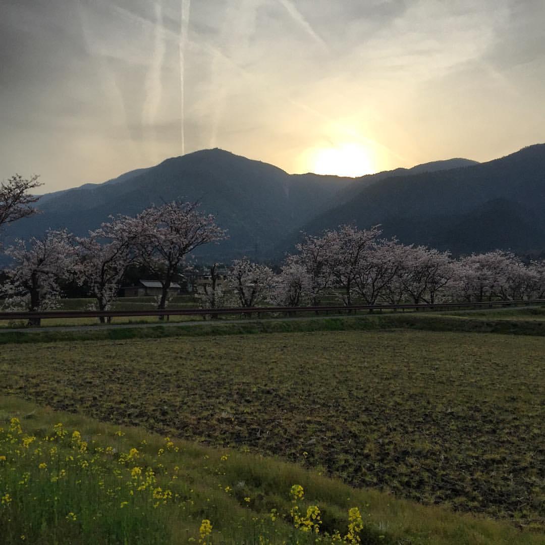 Stop it Japan, this is just too beautiful 😄 #japan #travel #wanderlust #livingthedream #sunset #sakura #ricefields  (at Hira Station (Shiga))