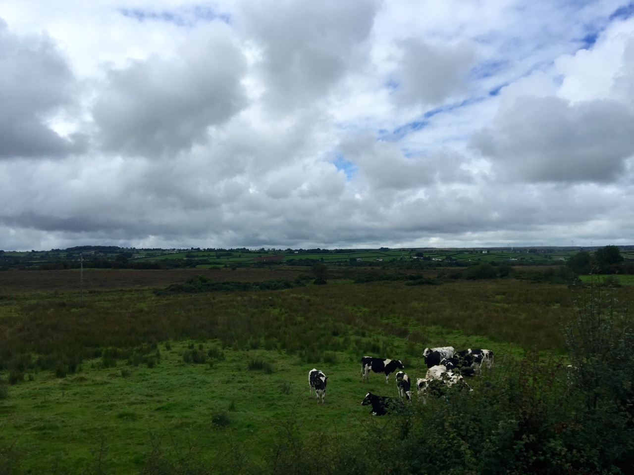 Northern Ireland dairy farming at its finest.