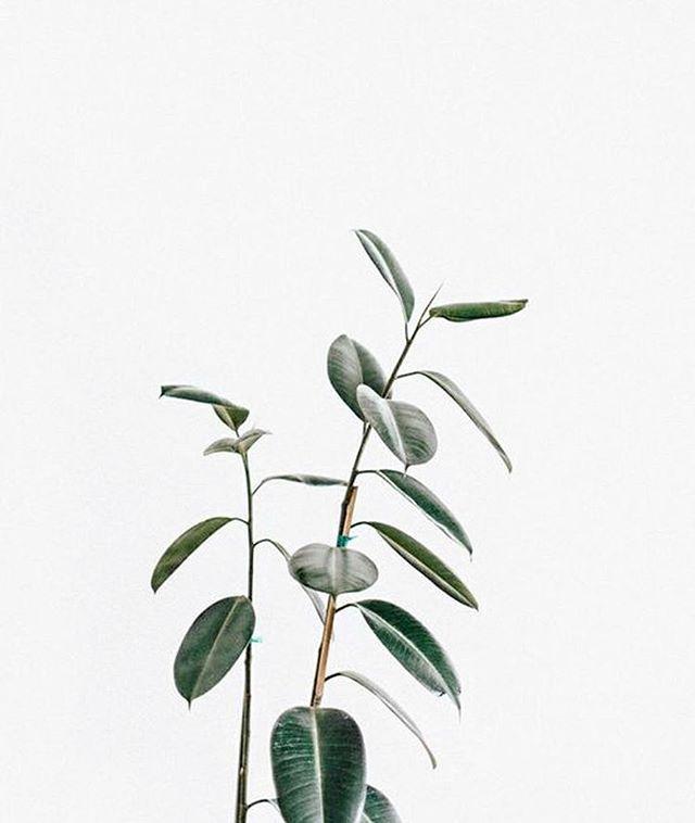 Hoult&Delis plant appreciation.