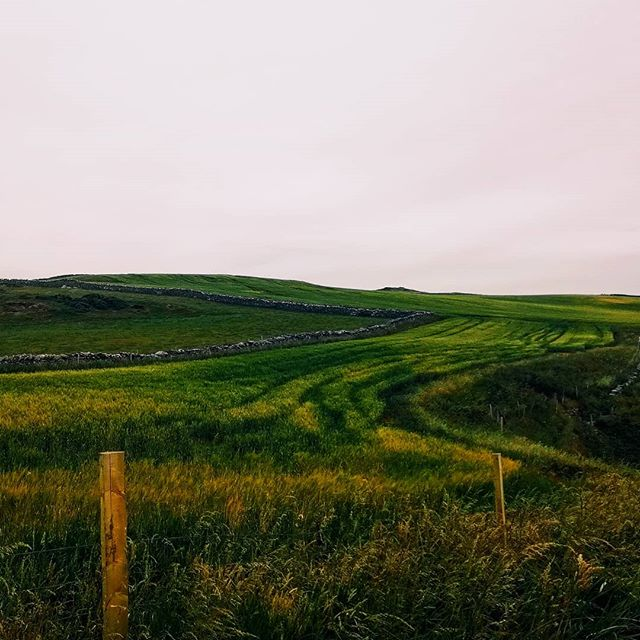 Great to be back home ° Peel, Isle of Man  #vscocam #landscape #vscoedit #isleofman #island #green #field
