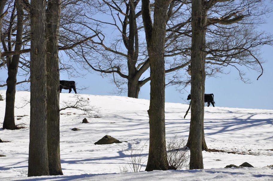 Wintertime at Stone Barns