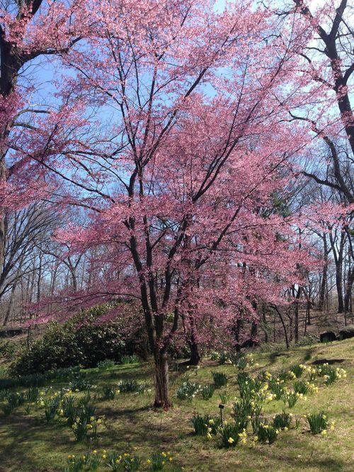 The New York Botanical Garden by Rebecca Pitts - 05.jpg