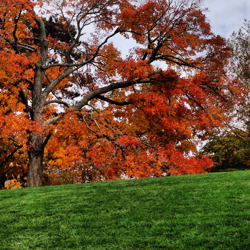 The New York Botanical Garden by Rebecca Pitts - 08.jpg