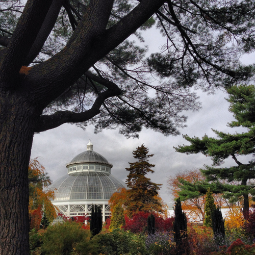 The New York Botanical Garden by Rebecca Pitts - 09.jpg