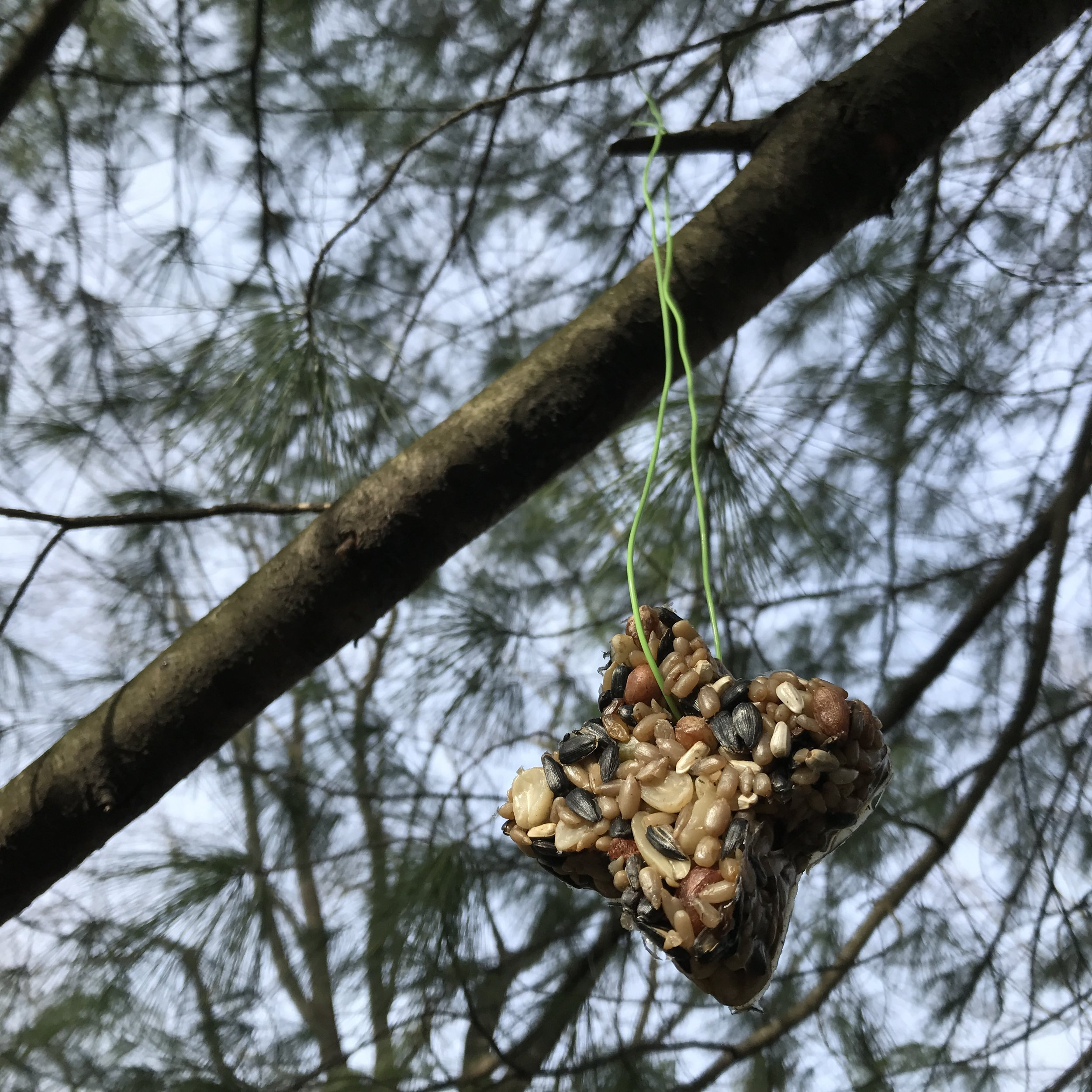 How to make DIY Bird Seed Ornaments - hanging.jpg