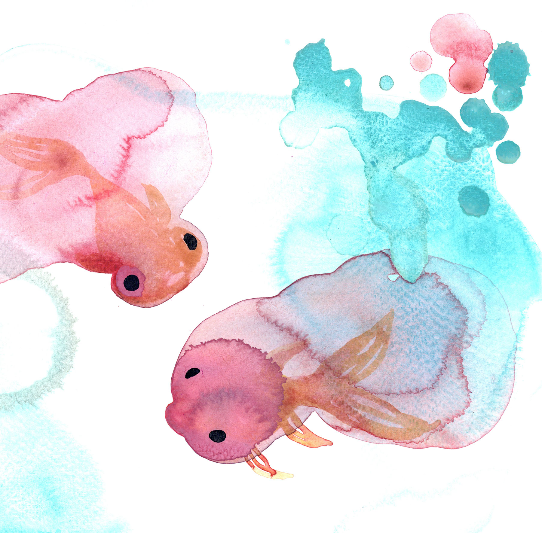 goldfish9.jpg