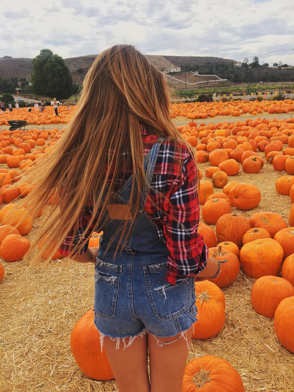 chloepumpkins.jpeg