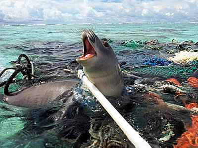 seal-trapped-in-plastic-sm.jpg