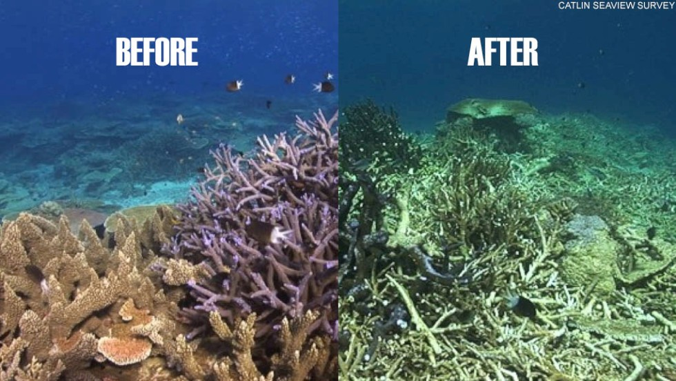 Before and after shots of reef damage