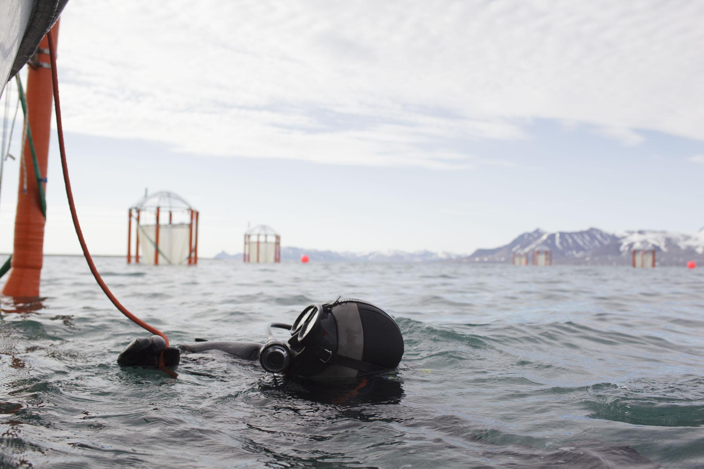 Arctic diver