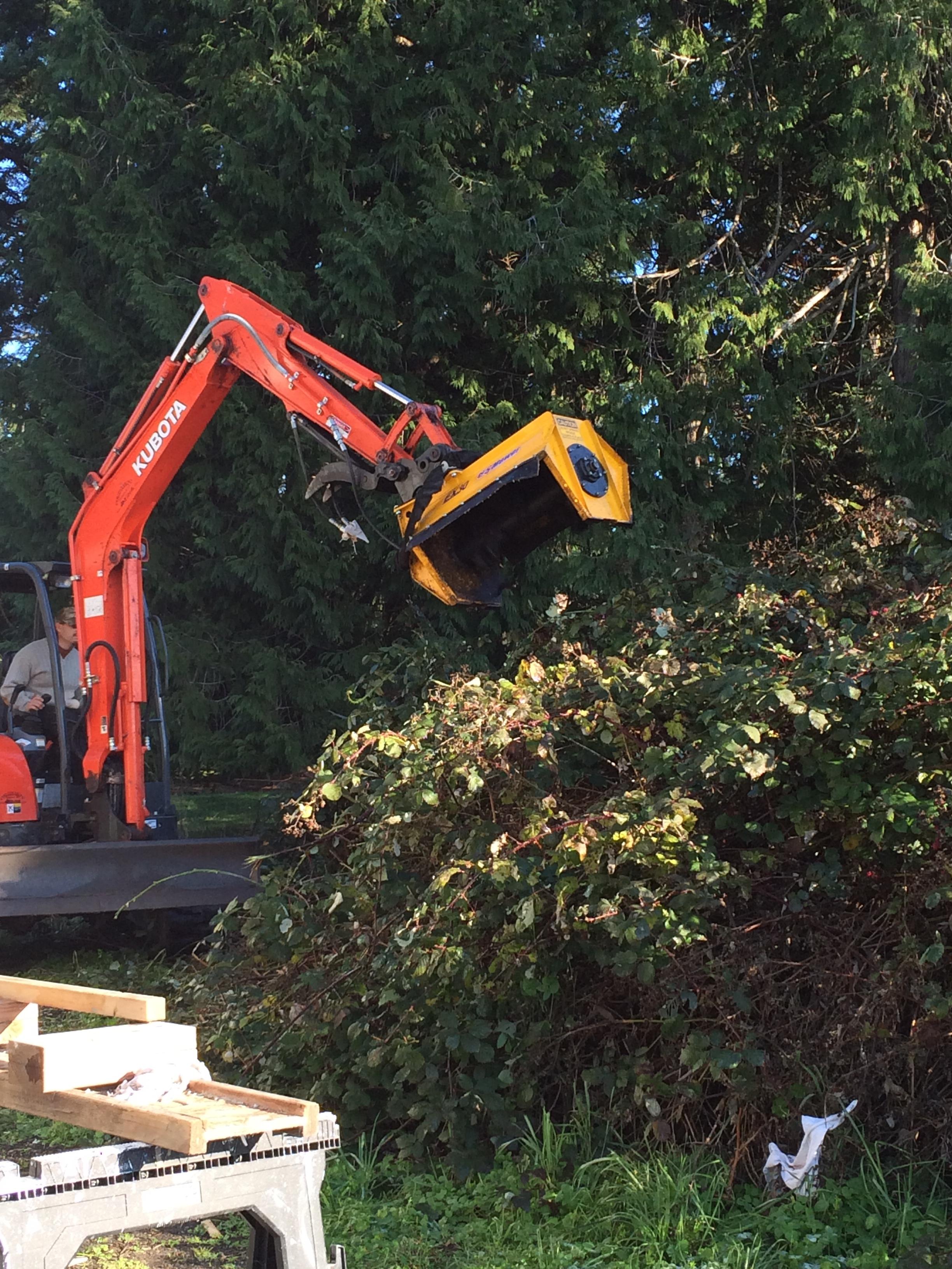 Forrest begins the bramble removal. November 2015