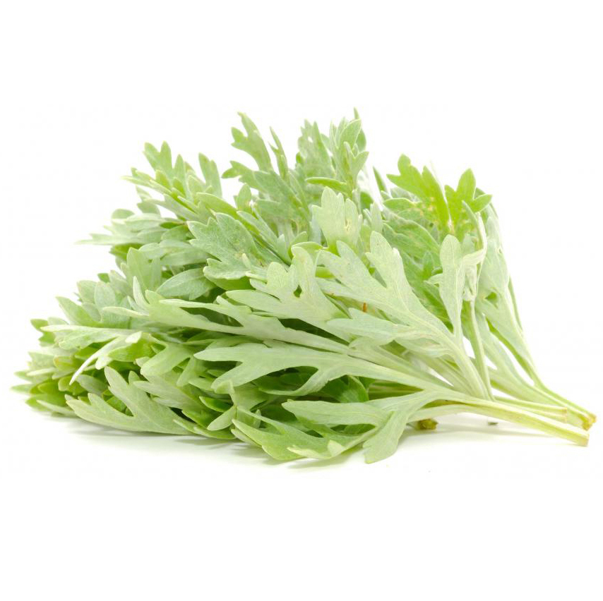 Wormwood has been used for everything from relieving bilious melancholy to curing jaundice. Famous for use in absinthe, the plant has been regarded with unfounded skepticism since the early 1900s.