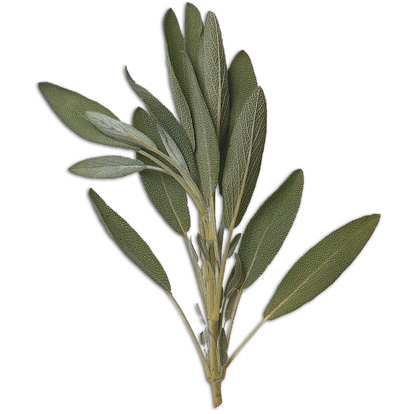 Sage, a common culinary herb, imparts a soft, sweet, and savory aroma. It contains anti-oxidants, and is a known memory enhancer.