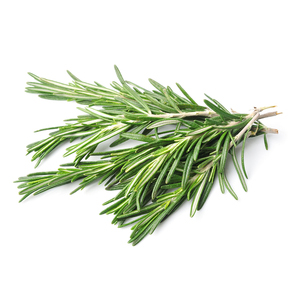 "Rosemary, whose name derives from the Latin ""dew of the sea."" Traditionally used to improve brain function and drive away nightmares. Is a classic culinary herb in many cultures."