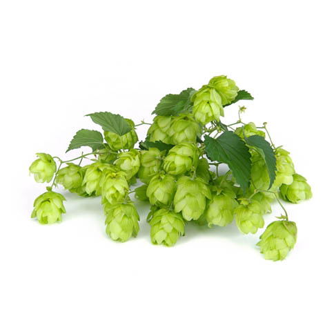 Hops is the most common bittering agent in beers today. It was just one of many plants used historically until the Reinheitsgebot of 1516 declared that beer can contain only water, malt, and hops.