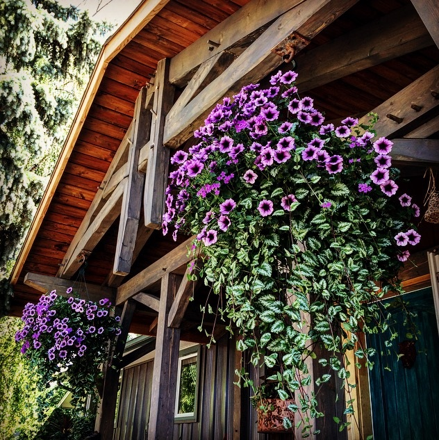 Front Porch flowers.jpg