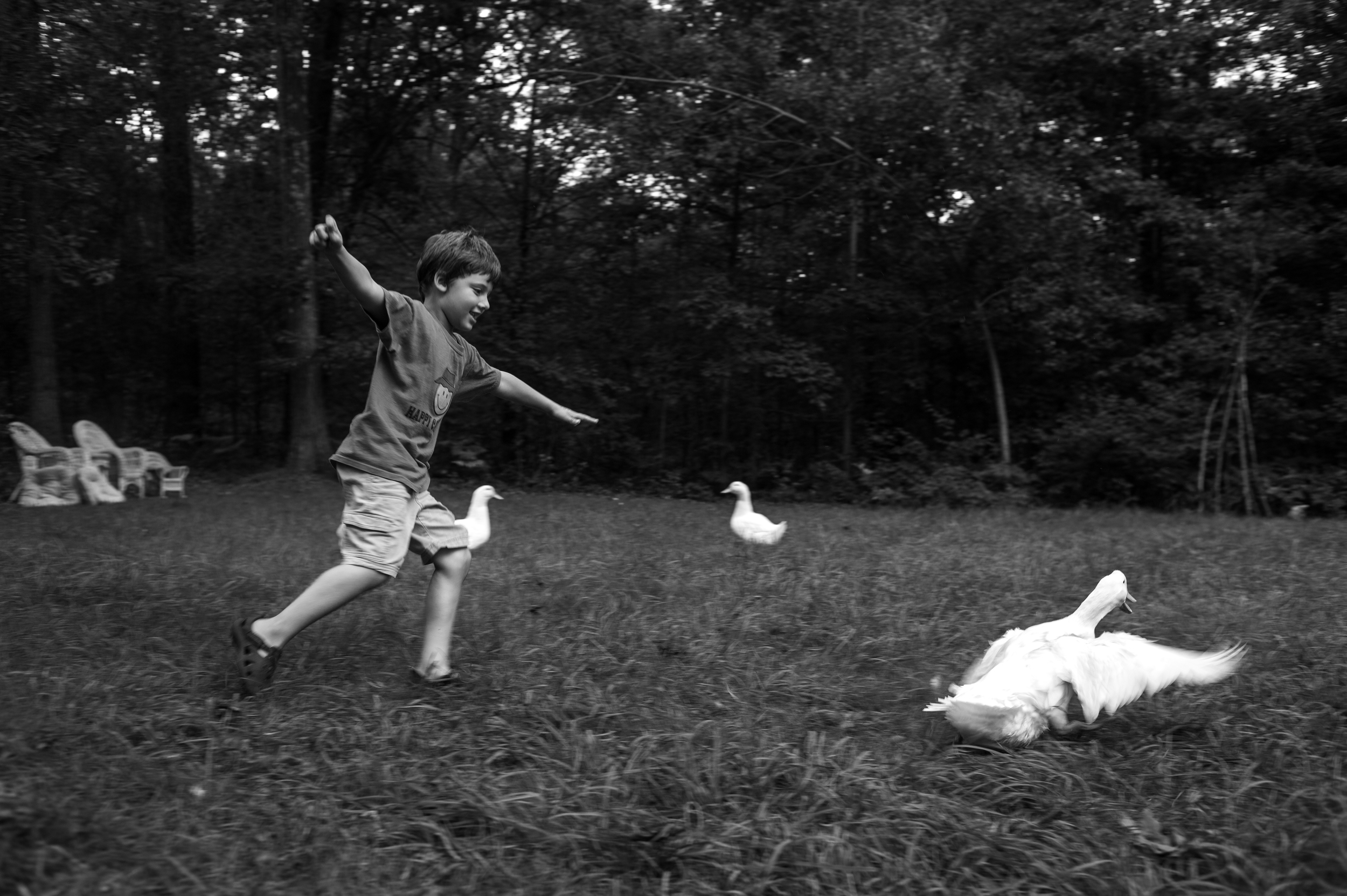The initial plan to sneak up on a group of ducks splashing around in a plastic pool led to a chase that had the ducks fleeting the back yard as Elijah follows close behind.