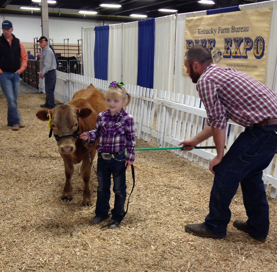 Beefalo Cattle Shows