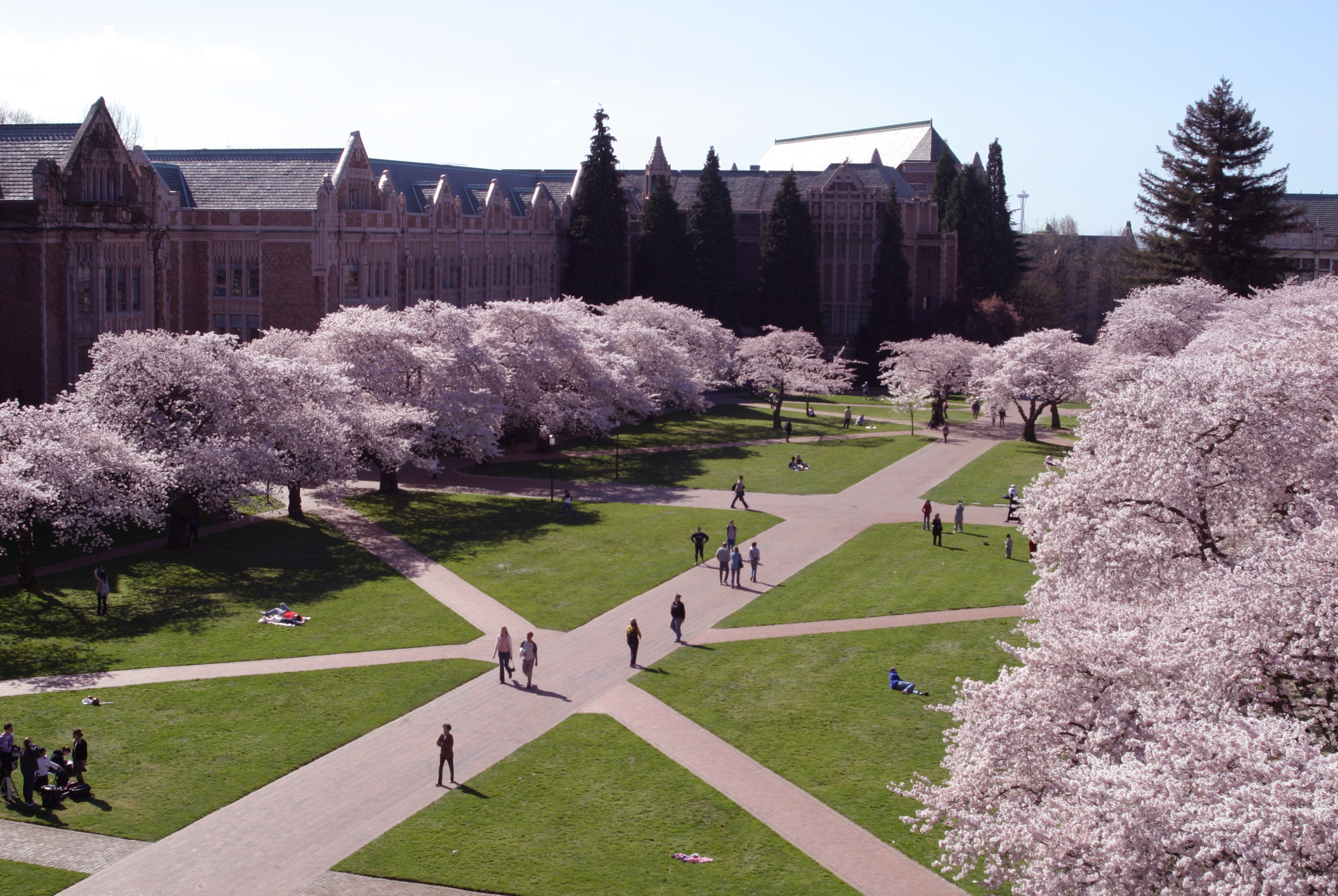 The Quad view from the windows of School of Art building at the University of Washington. One of the most beautiful spots on campus, especially in March, when all the cherry trees are in bloom. I feel very fortunate and proud to have been a part of this place.