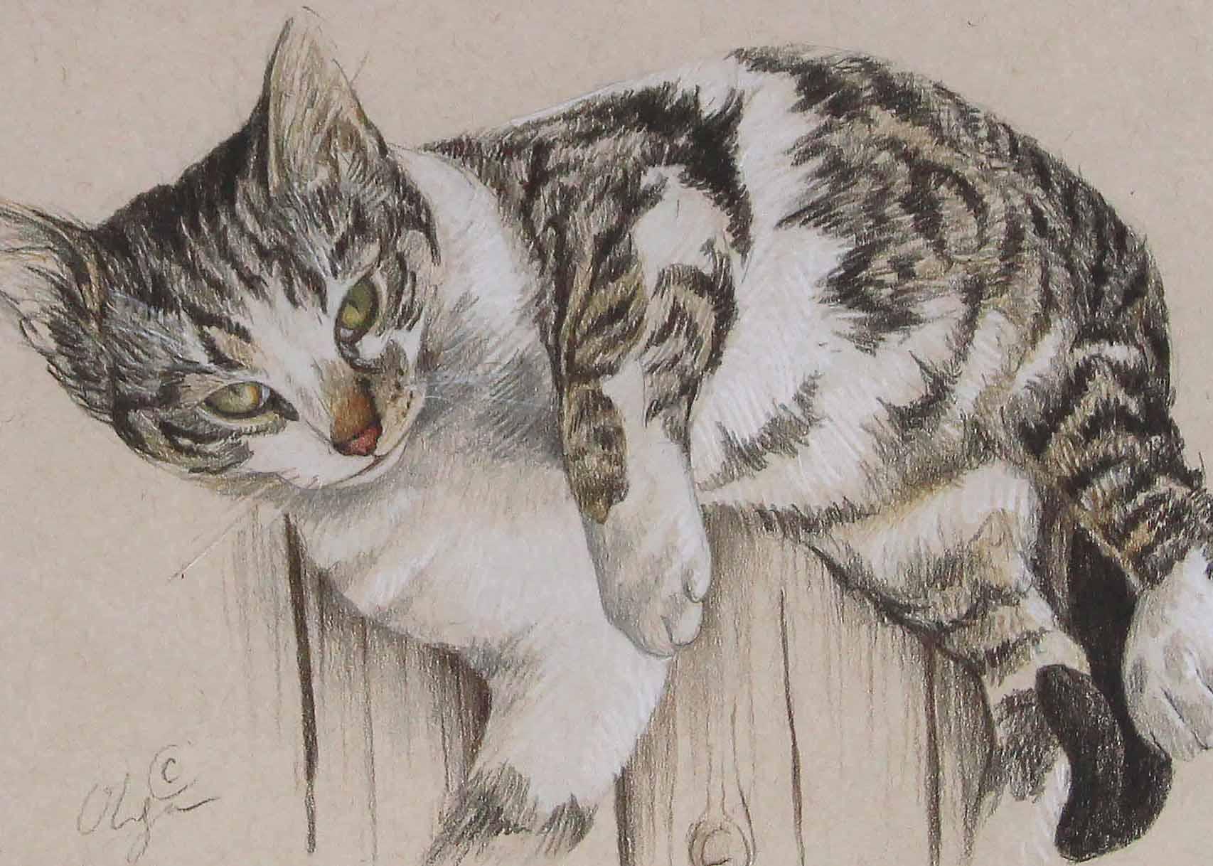 Small cat.jpg