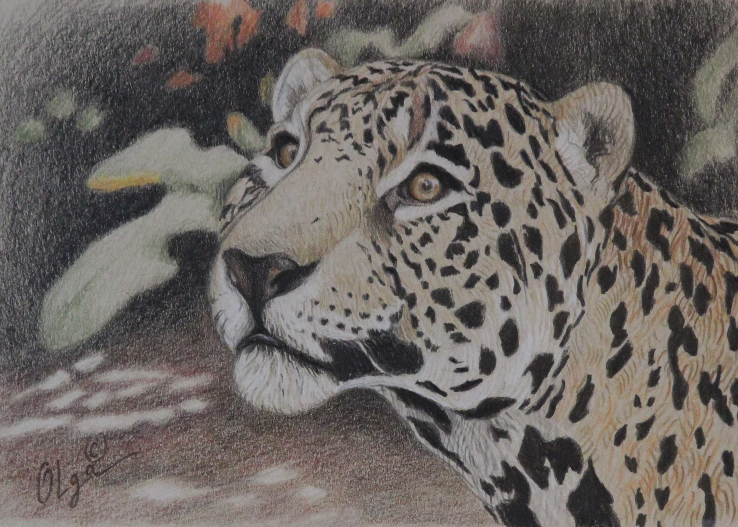 better leopard.jpg