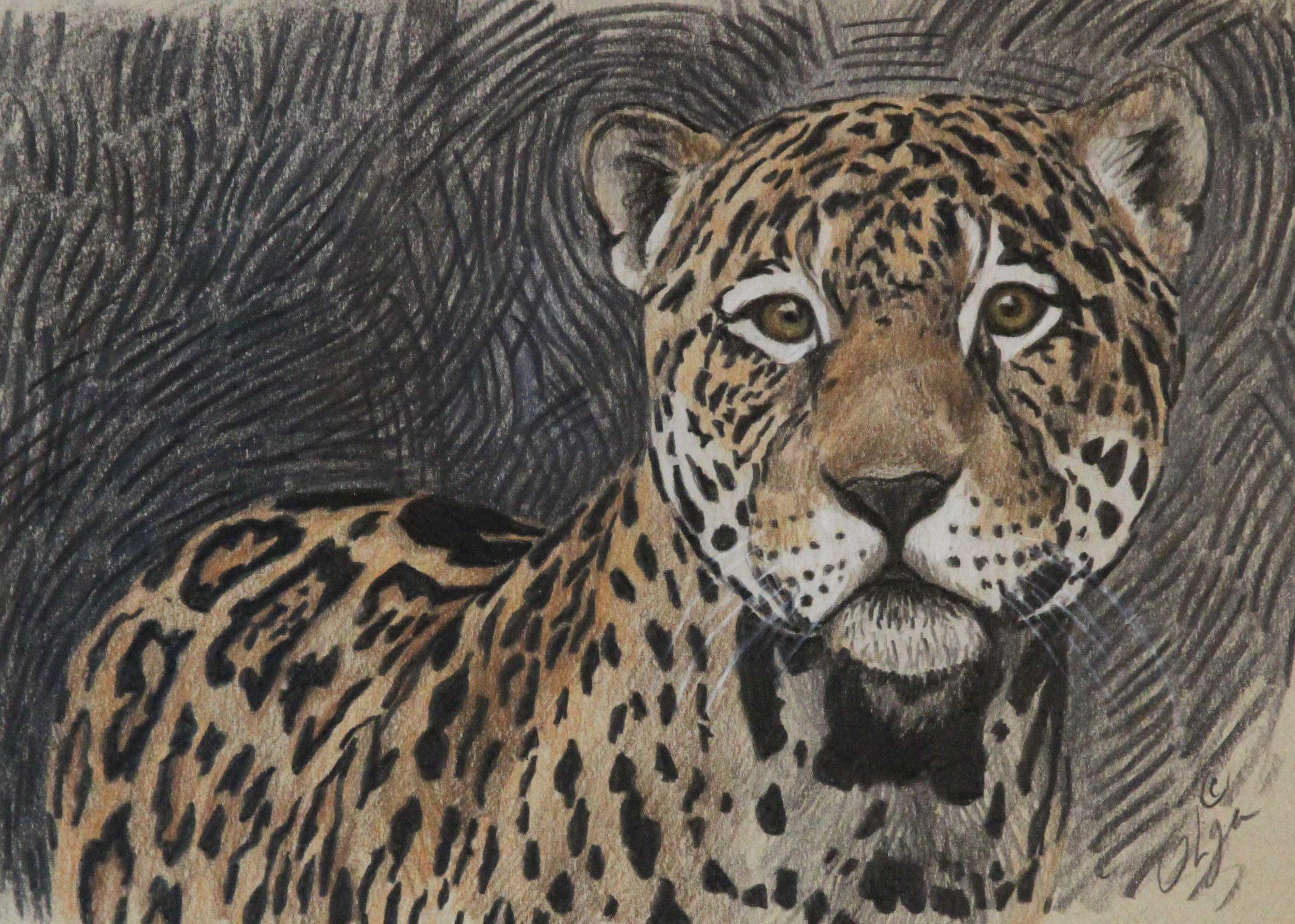 new leopard.jpg