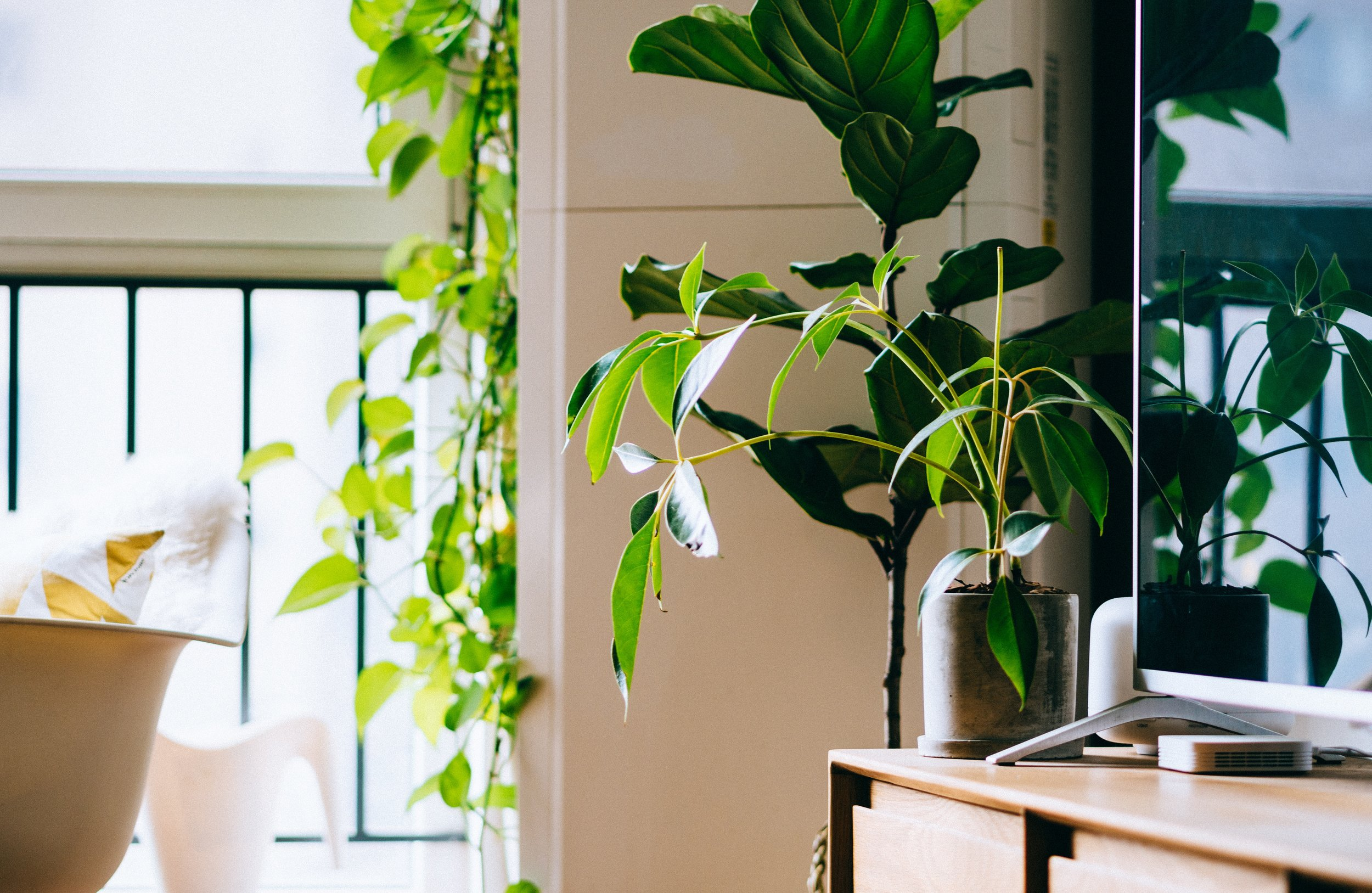 Going green's the new trend for coworking spaces. | Photo by  Samule Sun  on  Unsplash