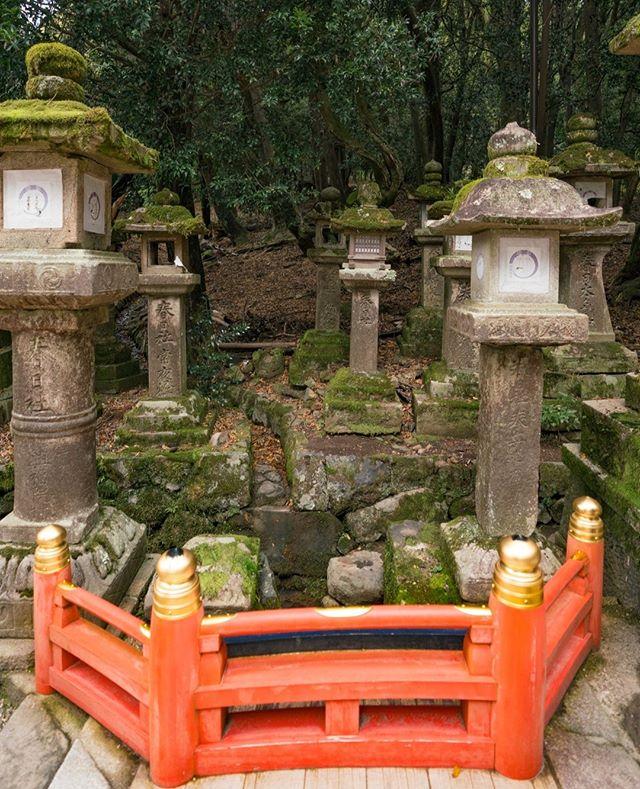 A miniature bridge  🗾🗼⛩️🇯🇵👘🏯🍜🍱🎎🌸 #snubstravels ➡️ Like travel vids? YouTube.com/ShannonMorse 📸 Sony A7RII 🌎 Location tagged above photo!  . #temple #shrine #japan #japantravel #traveljapan #SnubsInJapan #japantrip #discoverjapan #myjapan #instagramjapan #japanawaits #japanloverme #japanalert #japan_vacations  #japan_night_view #visitjapanjp #visitjapanau #visitjapan #japanrevealed #lovers_nippon #odigo #solotravel #travelvlogger #travelguide   @exploringjapan @visitjapanau  @japanalert @japanawaits @japan.vacations @japantravelcom @japanloverme @visitjapanjp @visitjapan.us   #nara #narajapan #narapark #naradeer 